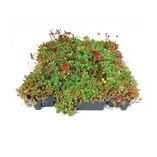 Modular Green Roof System/Sedumtray TX